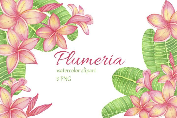 Tropical Flower Plumeria Frangipani Watercolor Clipart 627020 Illustrations Design Bundles In 2020 Watercolor Clipart Plumeria Flowers Plumeria