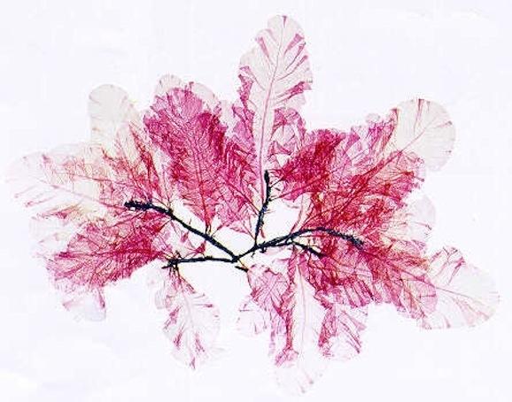 Nick Knight's Flora
