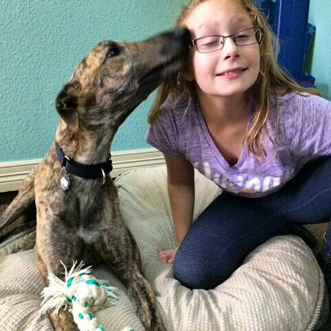 Pyrite loves his foster sister!  He is available! #dogs #kids #greyhounds #available #adopt #sighthounds #dogsofinstagram #greyhoundsofinstagram #kidsofinstagram