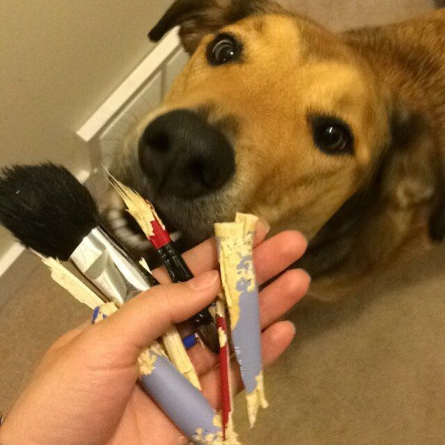 When you're dog is just as obsessed with makeup as you  at least these were back up brushes {#Fail #Puppy #ThatEyelinerTho}