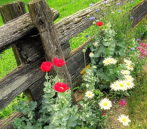 How to plant low cost, low upkeep, forever flowering flowerbeds.
