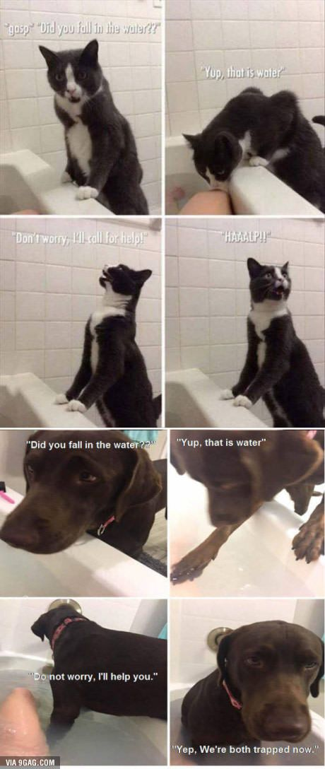 visit www.amazingdogtales.com for the best funny dog joke pics,inspirational dog stories and dog news.... Cat Vs. Dog. More
