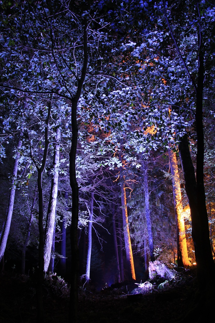 Enchanted Forest, Pitlochry, Scotland (Flow)