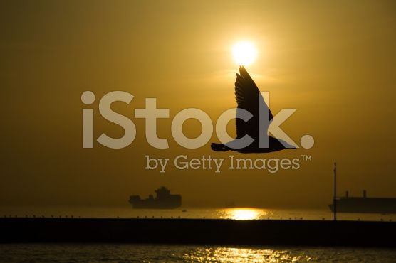 Seagull Shade at The Sunset royalty-free stock photo