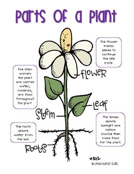 FREE plant life cycle anchor charts.  I can't wait to hang these in my science center!