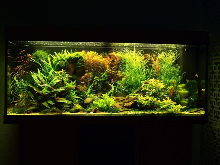 wow a full house d aquarium44 photo by henning buck akvarium fish aquascaping m m pinterest. Black Bedroom Furniture Sets. Home Design Ideas