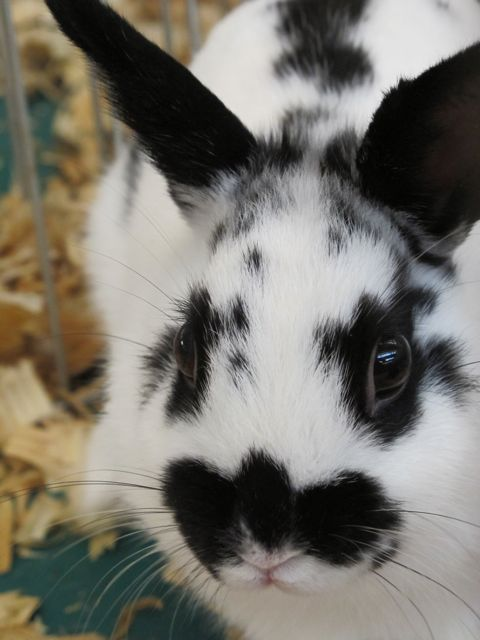 Black and white bunny -- my favorite color