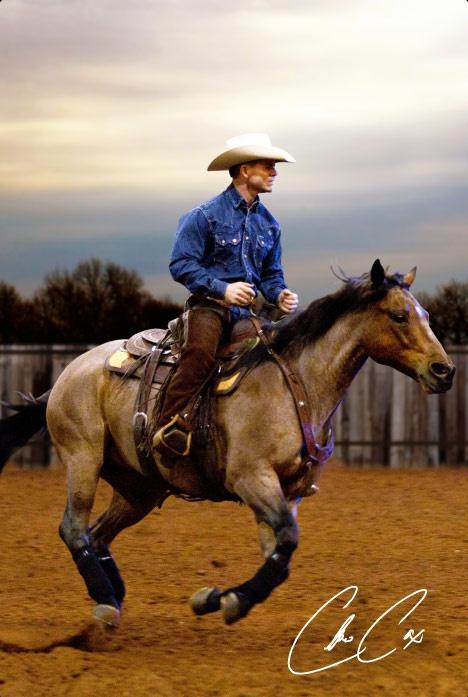 Cutting western quarter paint horse appaloosa