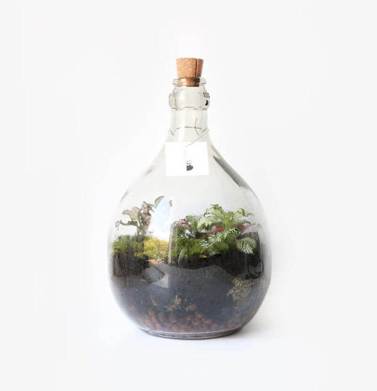 Small Prásinos 5L ecosysteem - Wonderlijk Woud