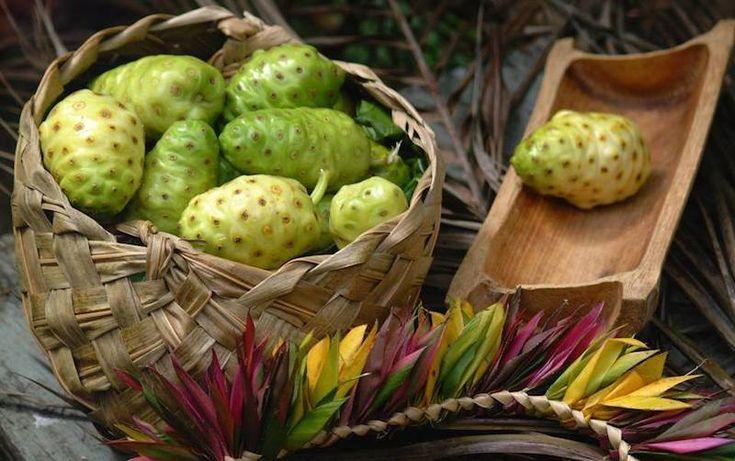 Il Noni – La Pianta Sacra dei Popoli Polinesiani