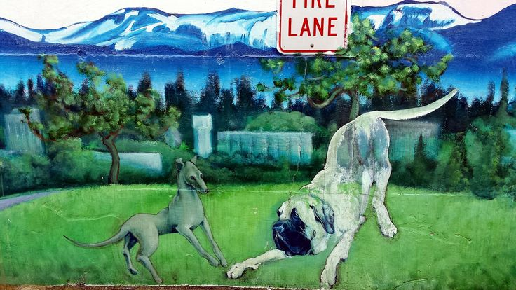 https://flic.kr/p/jkPWsD | Dogs playing,gray dog, ghost dog, mural, Acces Emergency Animal Care Hospital, Lake City Way, Seattle, Washington , USA | Sent via the Samsung GALAXY S®4, an AT&T 4G LTE smartphone