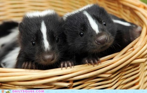 cute animals - Squee Spree: A Basket of Squee!