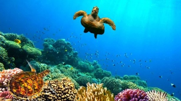 Caribbean Sea Animal Life: 49 Best Images About ABC Ocean Book On Pinterest