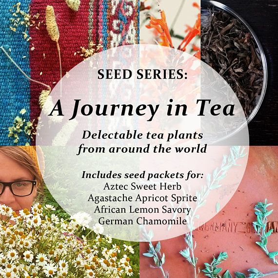 SEED SERIES: A Journey in Tea (Includes seeds for Aztec Sweet Herb, Agastache Apricot Sprite, African Lemon Savory & German Chamomile)