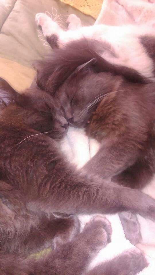 Mis bebes gatitos