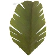 Varaluz 901K02 - Banana Leaf Tropical Wall Sconce VL-901K02