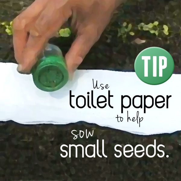 Gardening Tip: Using toilet paper can help with visibility when sowing small seeds and will disintegrate naturally.