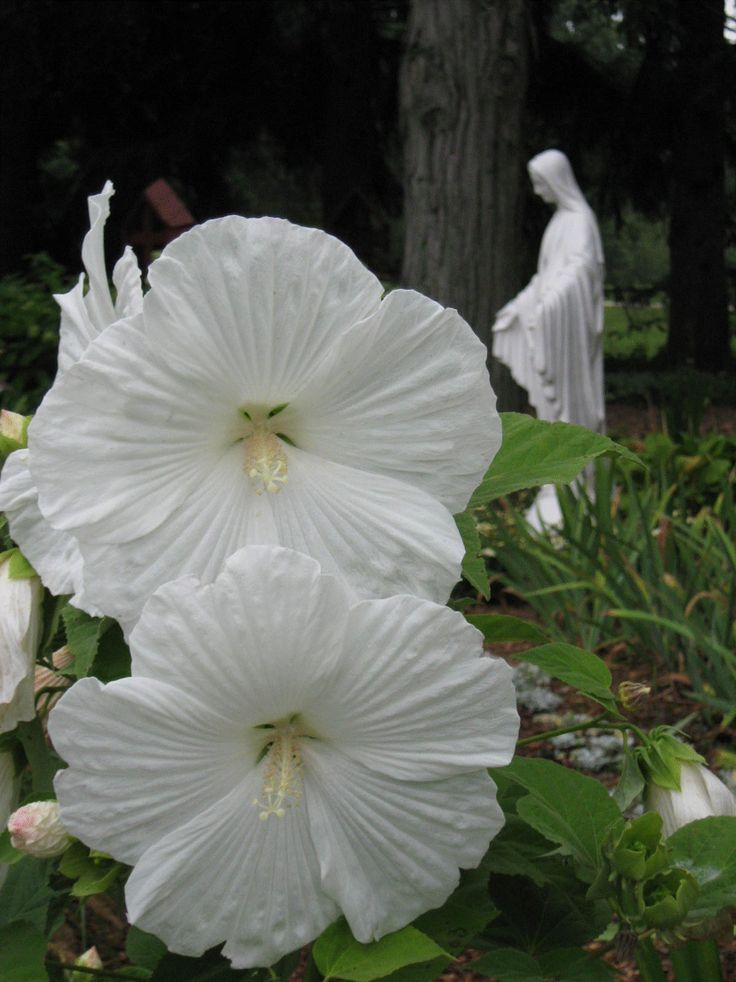 26 best images about marian garden on pinterest gardens for Rosary garden designs