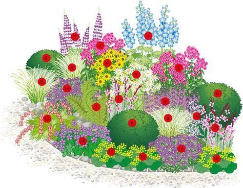 """Ein ganzjährig blühendes Staudenbeet: 1 Rittersporn (Delphinium-Hybr.), 2 Stauden-Phlox (Phlox paniculata), 3 Stauden-Lupine (Lupinus-Hybr.), 4 Sonnenhut (Rudbeckia """"Goldsturm""""), 5 Sommer-Margerite (Chrysanthenum maximum), 6 Buchs-Kugeln (Buxus sempervirens), 7 Wurm-Farn, 8 Federgras (Stipa pennata), 9 Zier-Salbei (Salvia nemorosa), 10 Seifenkraut (Saponaria lempergii), 11 Gaura, 12 Tränendes Herz (Dicentra spectabilis) , 13 Kissen-Aster, 14 Storchenschnabel, 15 Frauenmantel:"""