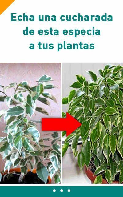 Echa una cucharada de esta especia a tus plantas. ¡Los resultados te encantarán!
