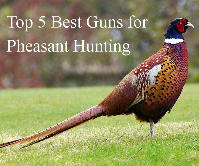 Top 5 Guns For Pheasant Hunting