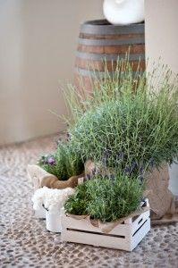 matrimonio erbe aromatiche - Google Search