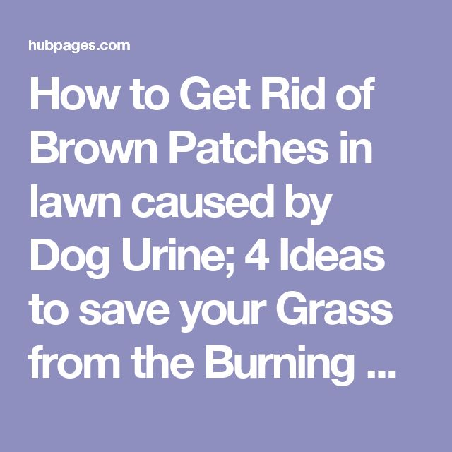 Best 20 brown spots ideas on pinterest facial brown for How to fix dog urine spots on lawn
