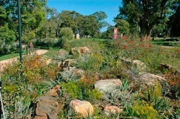 Australian native garden - could gardening be any easier than this?