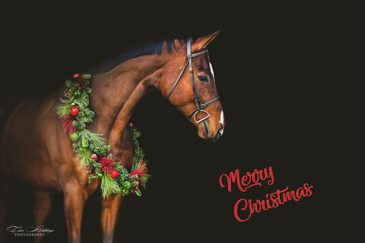 Christmas horse with a wreath