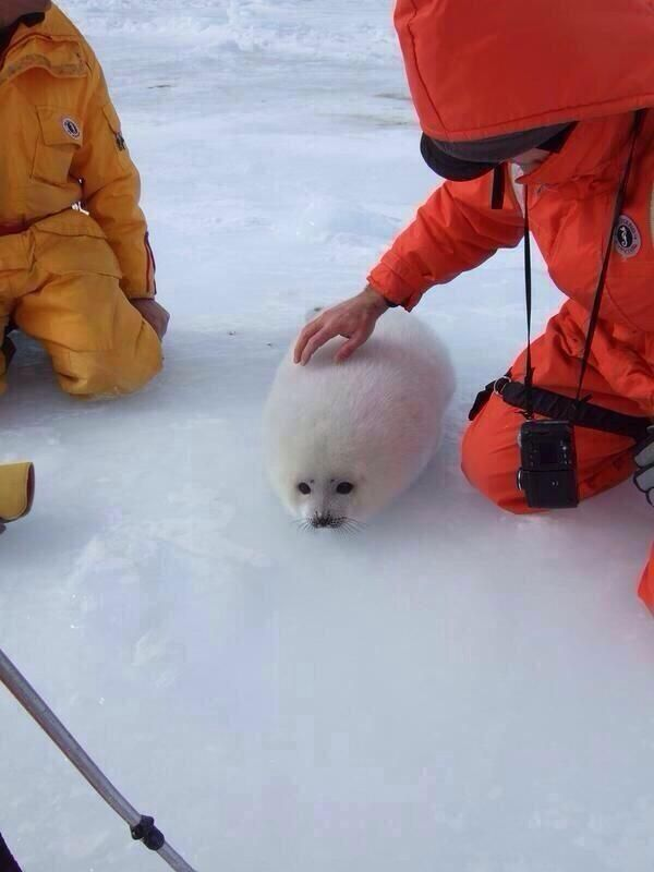 This snowball appears to have a face
