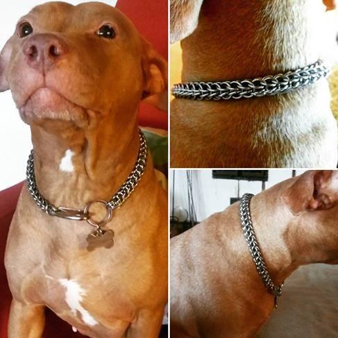 Full persian chain collar to my Pitbull <3