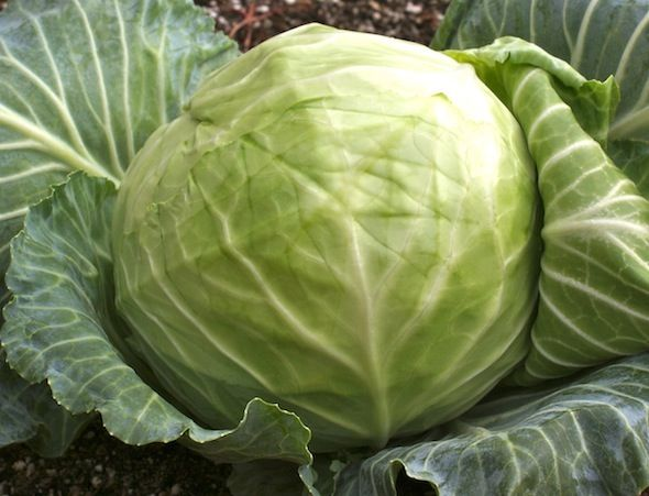6 Reasons to Drink Fermented Cabbage Juice - good information, I just haven't tried it yet  ;D