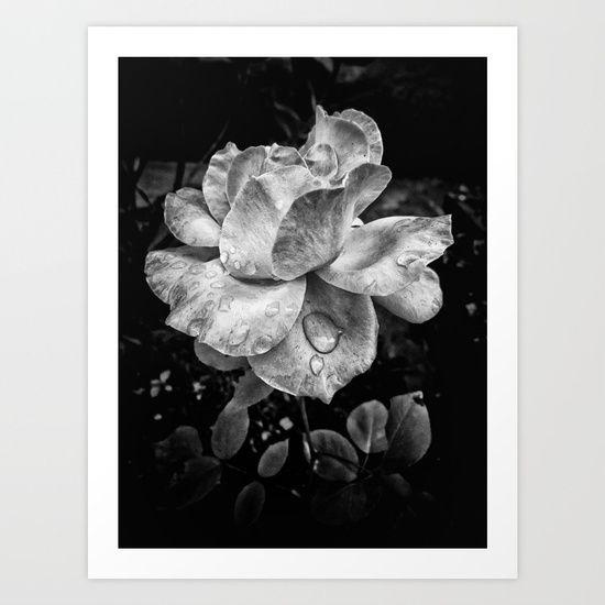 Rose petals with raindrops by Silvia Ganora #society6 #prints #wallart #homedecor #rose #blackandwhite