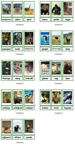 Kaartjes van dieren (1) - Dieren leren kennen, memory, lottospel, dierengeluiden nabootsen..