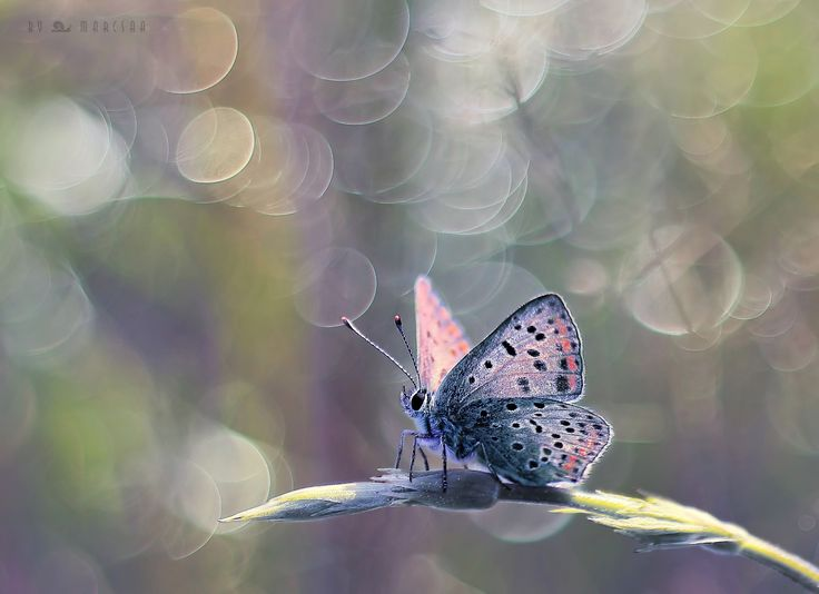 Butterfly dream - null