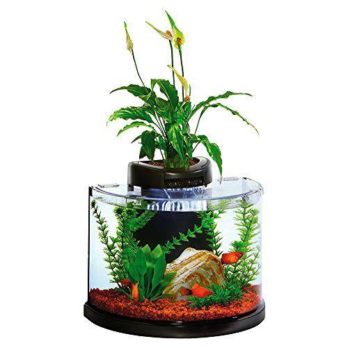 152 best betta fish tanks images on pinterest fish for Betta fish aquaponics