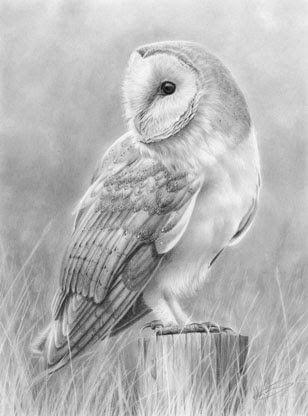 white barn owl sketch - Google Search