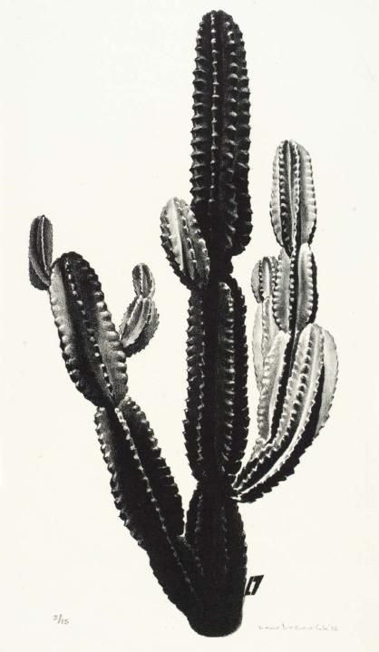 black cactus | The Prickly Pear | Pinterest