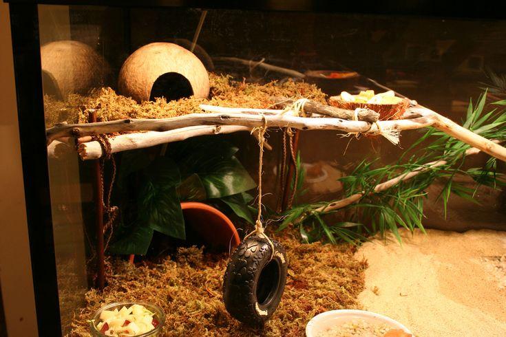 Tire Swing With Images Hermit Crab Habitat