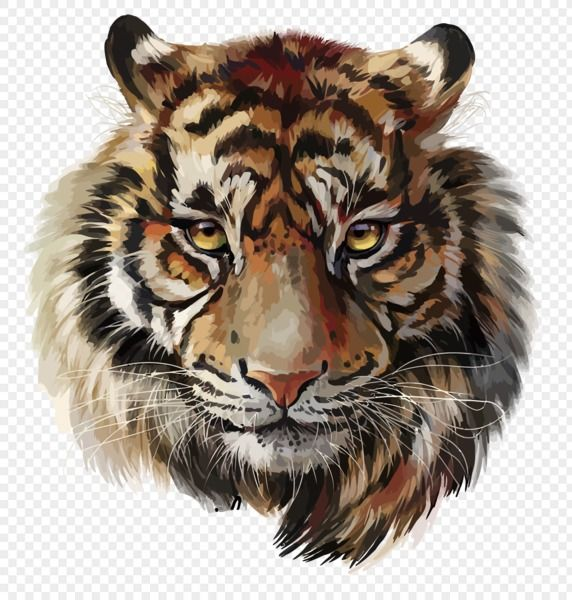 Free Download Tiger Png Tiger Painting Tiger Art Tiger Sketch
