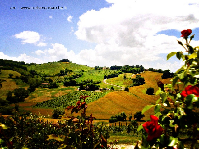 Le Marche countryside - Italy