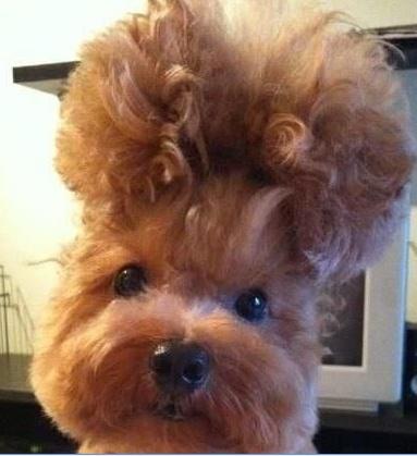 crazy dogs hair fun