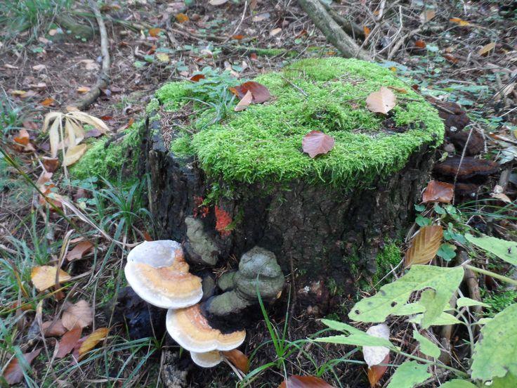 Na pařezu u lesa..