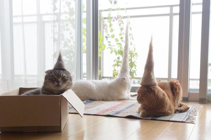 Japanese photographer Ryo Yamaziki has come up with the most genius use for all of that hair your cat sheds... cat hats! #catinthehat