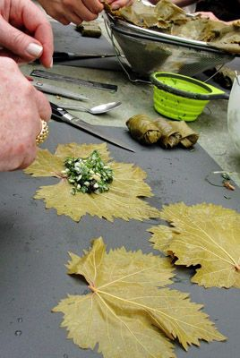 Come make dolmades (stuffed grape leaves) from our garden's vines and enjoy them with elegant Greek wines...