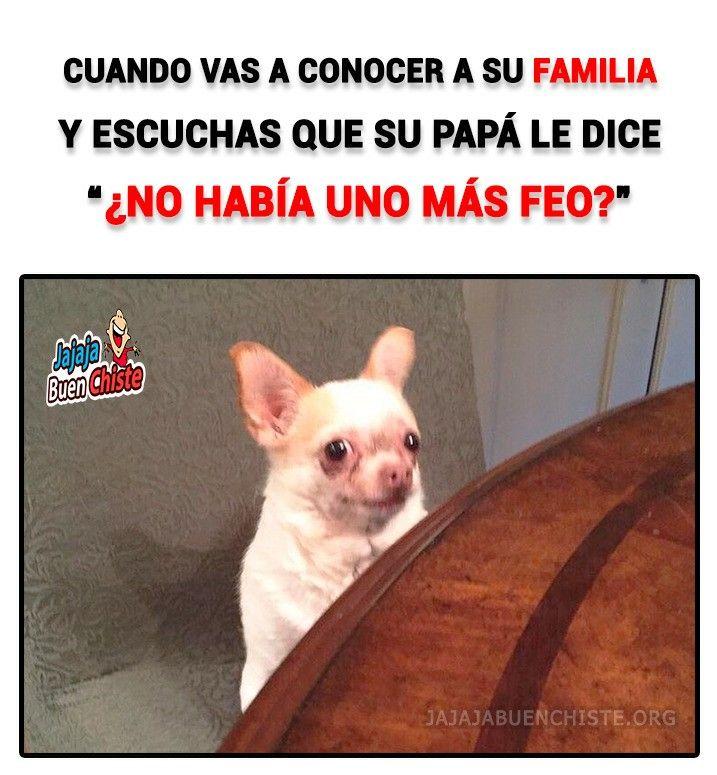 Pin By Natalia Escobar On Memesshow Funny Animal Memes Funny Memes Animal Memes