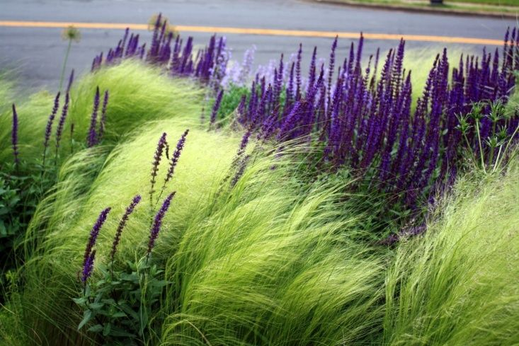 grasses and purple perennials in curb side street garden by Thomas Rainer via Phyto Studio