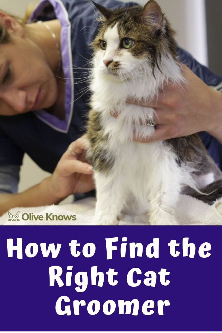 How To Find The Right Cat Groomer Cats Cat Insurance Cat Work