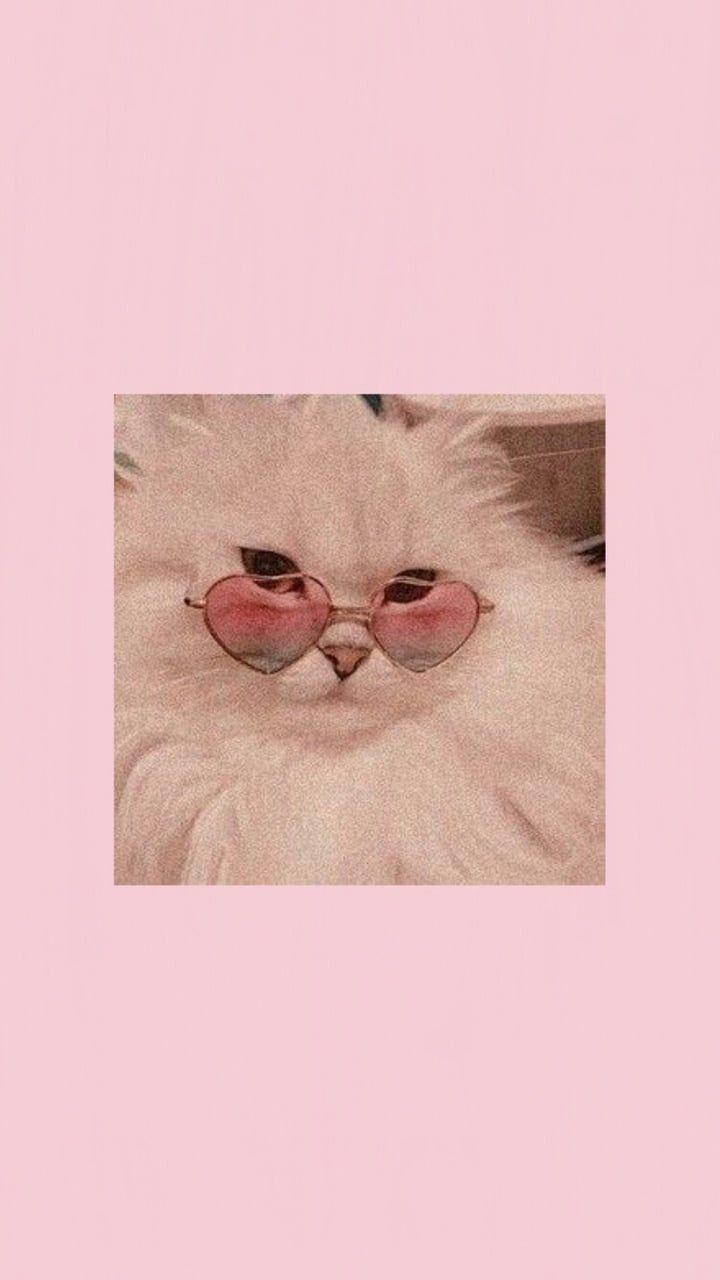 On Twitter Pink Wallpaper Backgrounds Cute Cat Wallpaper Aesthetic Iphone Wallpaper