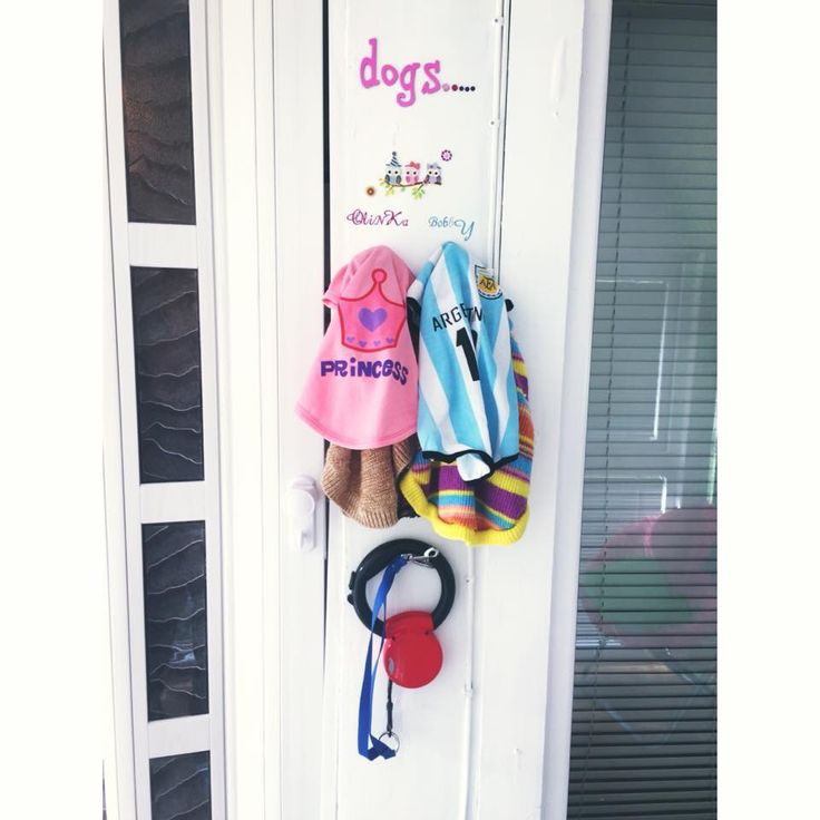 Wardrobe dogs ☺️